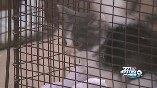PACC responds to home with 40 cats - Video