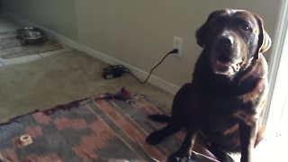 Owner convinces dog he's thirsty - when he's not - Video