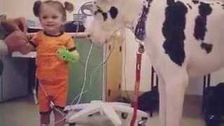 'He Likes the Bubbles!' – Great Dane Plays With Little Girl in Hospital - Video