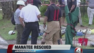 Manatee rescued from drainage pipe in Jacksonville - Video