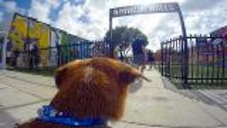 Miami's Wynwood Walls Doggie Cam - Video