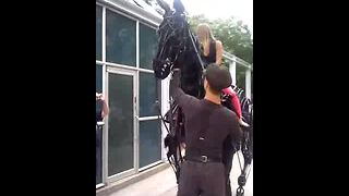 There's something strange about this horse, his moves will blow your mind! - Video