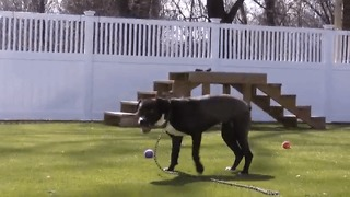 All Dogs Go Directly Into the Camera - Video