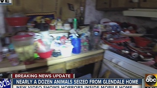 Maricopa County: 13 animals, one dead, found in Glendale mobile home - Video