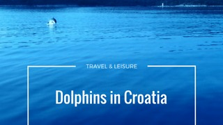 Dolphins in Croatia - Video