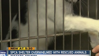 SPCA of Niagara County Overwhelmed with rescued animals - Video