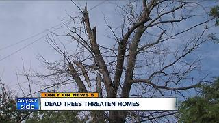Backlog of dead trees tower over power lines, threaten homes in Cleveland - Video