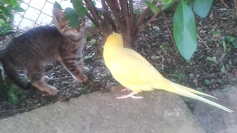 Curious Parrot Desperately Attempts To Befriend Cautious Kitten