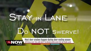 What to do if you see a deer while driving - Video