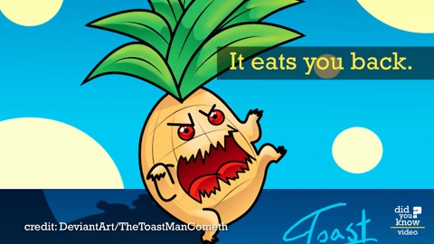 When You Eat Pineapple, It Eats You Back