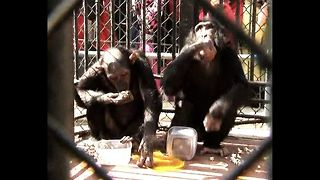 Monkey Marriage - Video