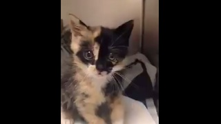 This rescued kitten found in the back of a truck is so full of love! - Video