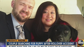 Couple searching for puppy after rollover crash - Video