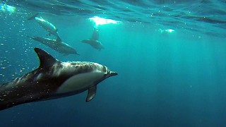 Caught On Camera: GoPro Captures Dolphin Pod Speeding Through The Ocean - Video
