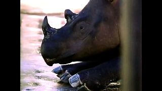 Rhino Sanctuary - Video