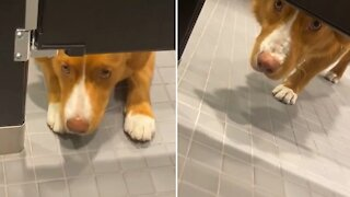 Puppy stares at stranger from underneath stall in public bathroom