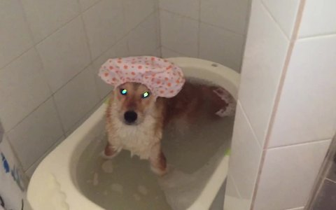 Dog's bath time routine is one of a kind