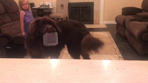 Smart Newfoundland brings bowl when asked