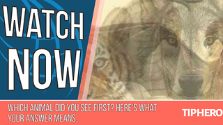 Which Animal Did You See First? Here's What Your Answer Means. - Video