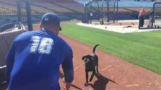 Professional Baseball Player Tries Hand at Dog Training - Video
