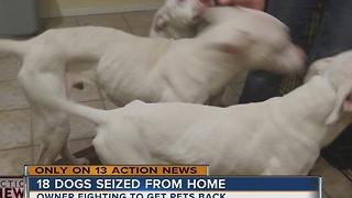 Dog rescuer under investigation for animal cruelty - Video