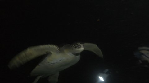 Divers explore mysterious underwater world by night in the Galapagos Islands