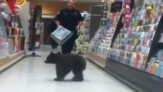Black bear cub goes Sunday shopping - Video