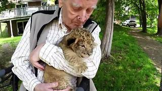 War hero's emotional experience with lion cubs - Video