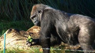 Counting Animals In London Zoo - Video