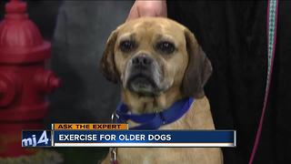 Ask the Expert: Exercise for older pets - Video