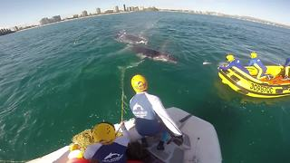 Humpback whale freed from shark net - Video
