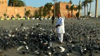 Libyan Pigeons Celebrate Gaddafi's Exit - Video