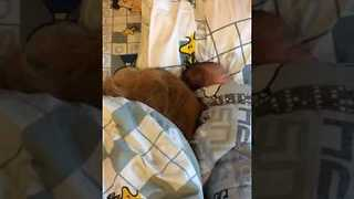 Protective Pup Snuggles Up Beside Sleeping Baby - Video