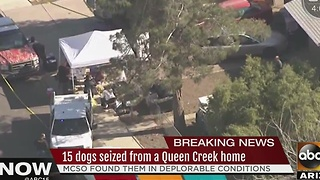 15 dogs seized from Queen Creek home living in deplorable conditions Wednesday - Video
