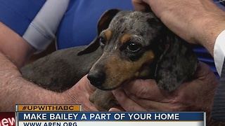 Rescues in Action: Meet Bailey - Video