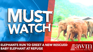 Elephants Run To Greet A New Rescued Elephant At Refuge - Video