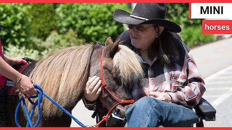 Troop of tiny rescue horses bring comfort to dementia sufferers