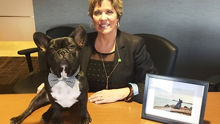 Famous French Bulldog surprises fan at work - Video