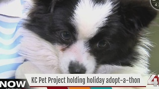 KC Pet Project to hold Holiday Adoptathon - Video