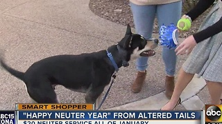 Start the new year by neutering your pet for a low price - Video