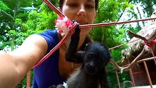 Orphaned Baby Howler Monkeys Hang Out and Play - Video