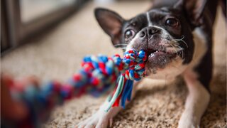 Vets Share Mistakes You Make When Playing With Pets