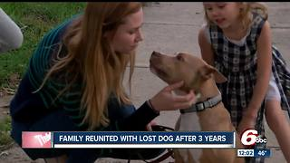 Stolen dog reunited with family three years later - Video