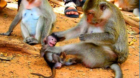 Why Mum Fight Her Baby Monkey? Mum Hit Baby Very Much| Baby Cry Loudly Cos Mother Hit
