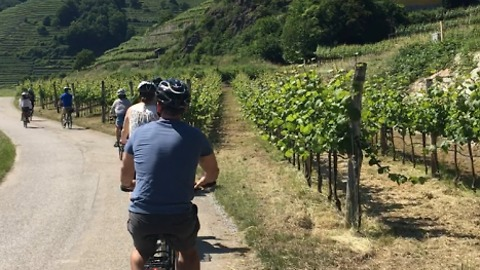 Biking through Vienna's wine country