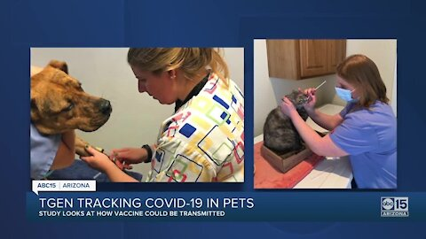 Some Arizona pets testing presumptive positive for COVID-19