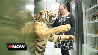Behind-the-scenes tour yields many treasures - Video
