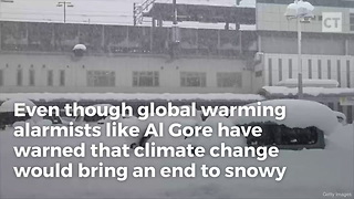 How Alligators Survive Al Gore's Global Warming - Video