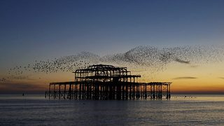 Thousands of starlings perform mesmerising murmuration above pier - Video