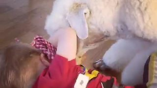 Playful poodle adorable tickles little boy - Video